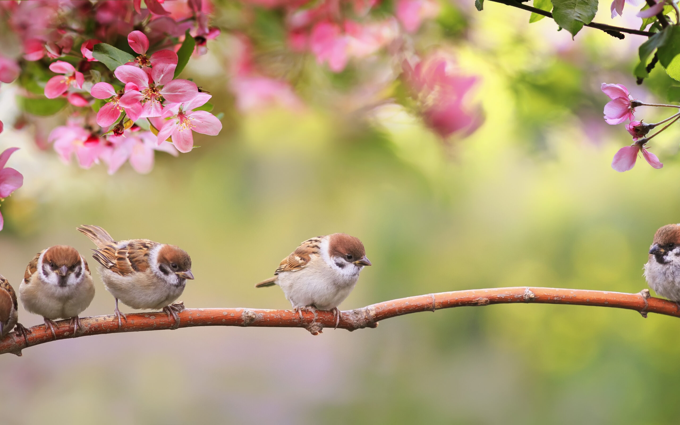 Birds in spring on a branch