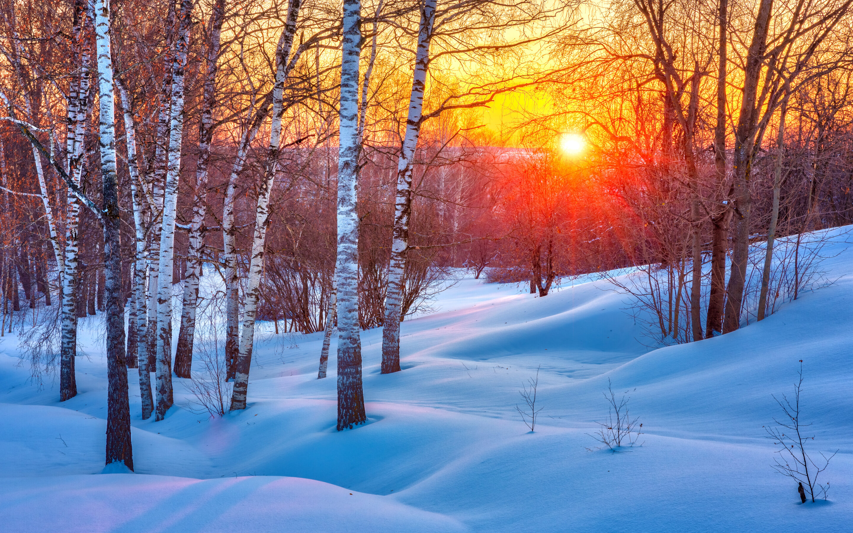 Winter sunset in forest